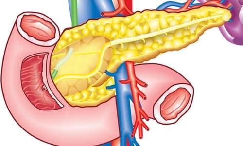Уменьшение поджелудочной железы сопровождается функциональной недостаточностью, при которой нарушается выработка пищеварительных ферментов, инсулина и глюкагона