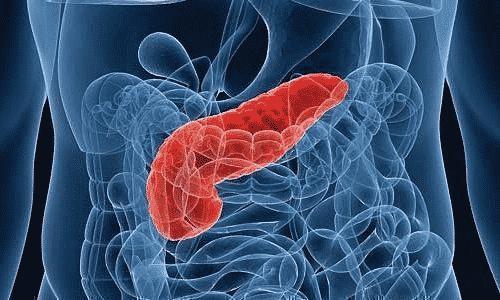 Поджелудочная железа обеспечивает углеводный обмен и способствует стабильному перевариванию питательных веществ