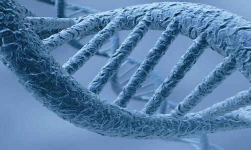 ЭМГПС способствует энергетическому насыщению тканей и поддержанию высокой концентрации макроэргических соединений