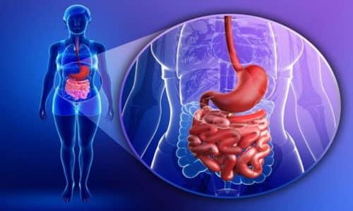 Процесс переработки пищи происходит в несколько этапов с участием различных структур желудочно-кишечного тракта