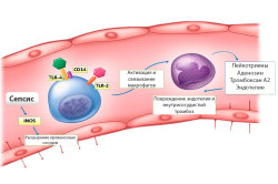 Противопоказания к спинальной анестезии при сепсисе