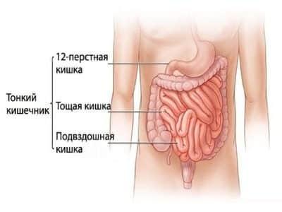 Развития болезни основан на проникновении из желудка гиперацидного сока. Повышение кислотности среды провоцирую стенки двенадцатиперстной кишки к воспалению