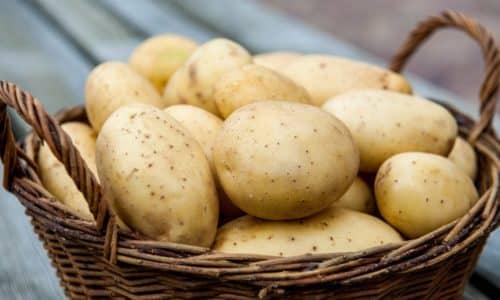 Картофель можно отнести к основным продуктам для людей во всем мире