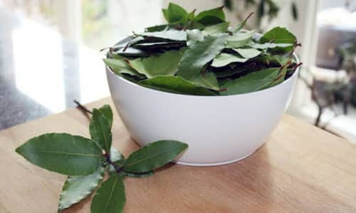 Для приготовления лекарства возьмите 20 крупных листовых пластин и залейте 2 стаканами горячей воды