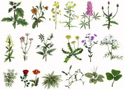 Лечение запора народными средствами подразумевает использование лекарственных трав и растений