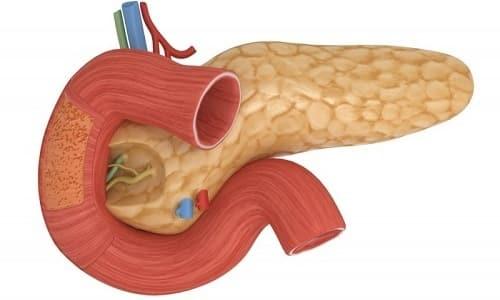 Поджелудочная железа продуцирует необходимый для слаженной работы организма инсулин