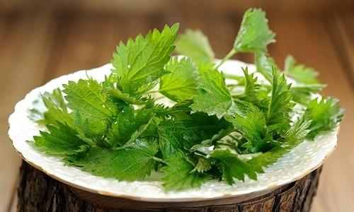 В период ремиссии панкреатита рекомендуется включать в меню летний крапивный суп из молодых побегов растения