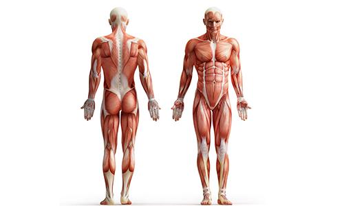 Правила тренировок при патологии в позвоночнике включают усиление брюшного пресса и спинных мышц