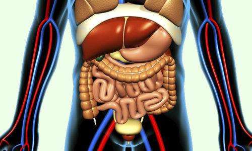 После лечебного массажа нормализуется работа внутренних органов