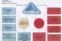 Гормоны надпочечных желез и их функции