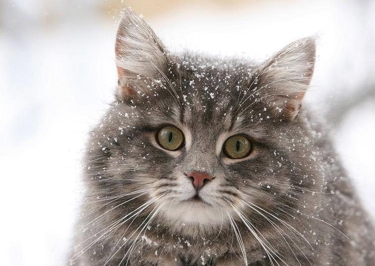 заражение через кошку