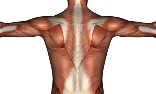 Лечебная гимнастика обладает полезным свойством, она предотвращает деструкцию мышечной ткани