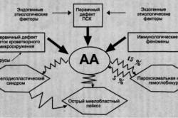 Патогенез приобретенных апластических анемий
