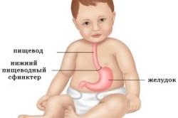 Основные элементы пищевода детей