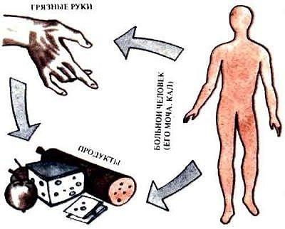 пути передачи гепатита а