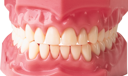 Внешний вид челюсти человека