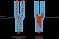 Понятие тромбоза