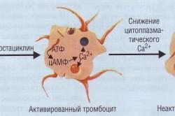 Виды тромбоцитов